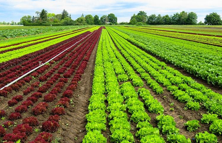 Bayerische Sommerküche : Leichte sommerküche: jetzt ist zeit für regionale salate